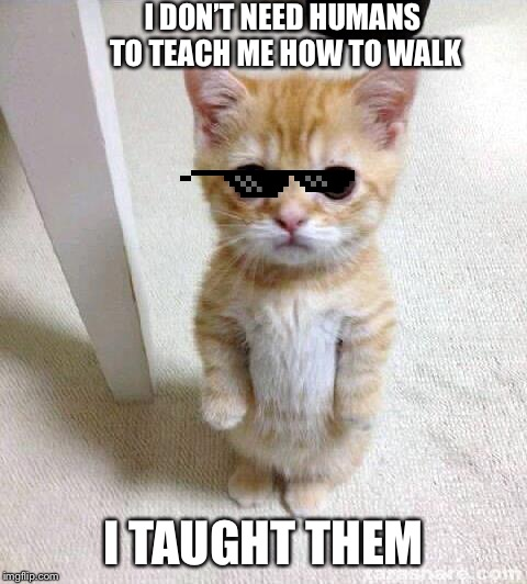 Cute Cat Meme | I DON'T NEED HUMANS TO TEACH ME HOW TO WALK I TAUGHT THEM | image tagged in memes,cute cat | made w/ Imgflip meme maker