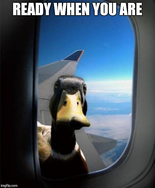 Duck on plane wing | READY WHEN YOU ARE | image tagged in duck on plane wing | made w/ Imgflip meme maker