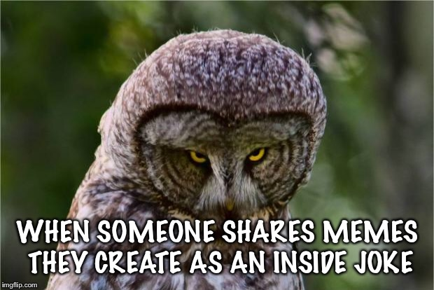 Seriously Owl | WHEN SOMEONE SHARES MEMES THEY CREATE AS AN INSIDE JOKE | image tagged in seriously owl | made w/ Imgflip meme maker