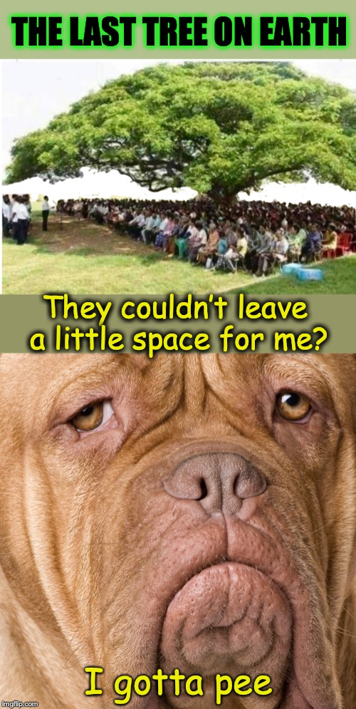 Environmental Doomsday Scenario | THE LAST TREE ON EARTH They couldn't leave a little space for me? I gotta pee | image tagged in tree,sad dog,environment | made w/ Imgflip meme maker