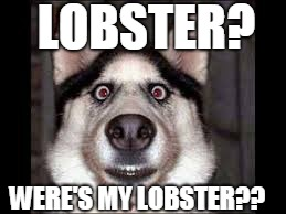 dogy | LOBSTER? WERE'S MY LOBSTER?? | image tagged in dogy | made w/ Imgflip meme maker