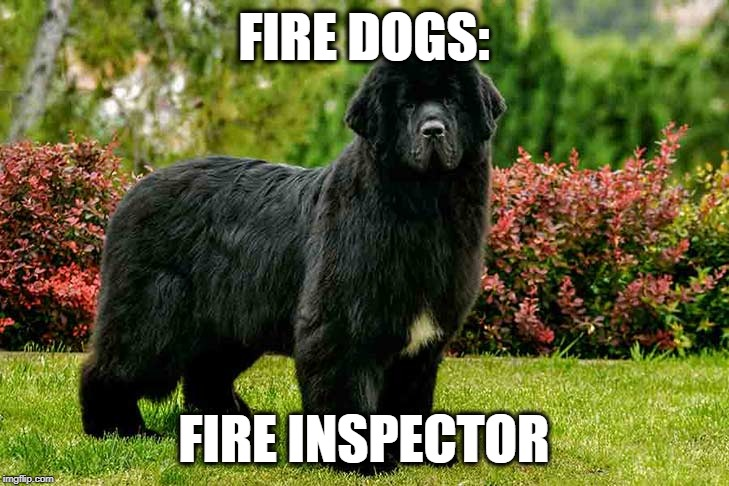 Fire Dog: Fire Inspector | FIRE DOGS: FIRE INSPECTOR | image tagged in dogs,dog,fire,firefighter,firefighters | made w/ Imgflip meme maker