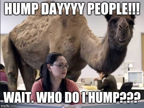 Hump Day | HUMP DAYYYY PEOPLE!!! WAIT. WHO DO I HUMP??? | image tagged in camel,hump day camel,hump day | made w/ Imgflip meme maker