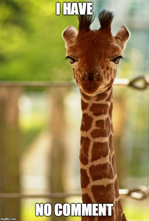 no comment giraffe | I HAVE NO COMMENT | image tagged in no comment giraffe | made w/ Imgflip meme maker