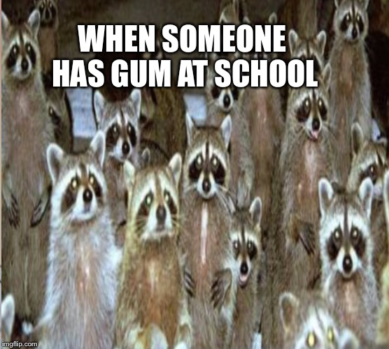 Look! | WHEN SOMEONE HAS GUM AT SCHOOL | image tagged in raccoon | made w/ Imgflip meme maker