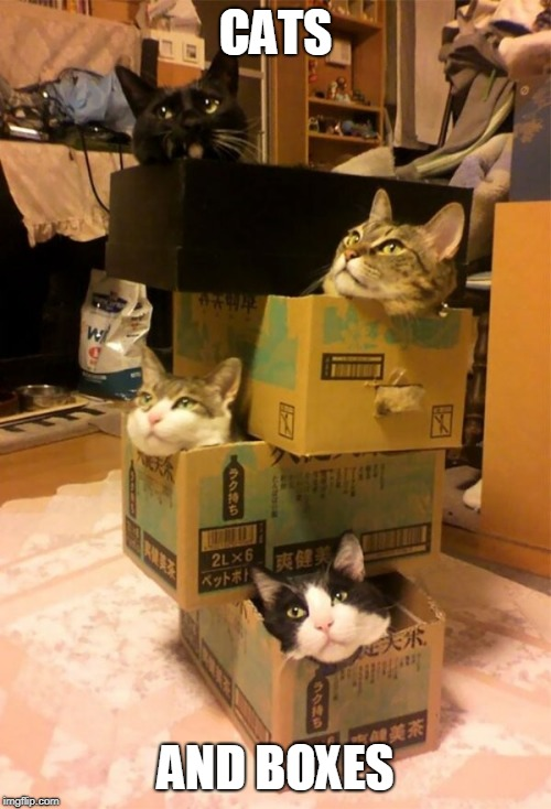CATS AND BOXES | image tagged in cats | made w/ Imgflip meme maker