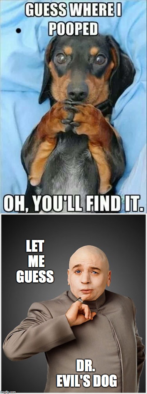 Oh, you'll.... | LET ME GUESS DR. EVIL'S DOG | image tagged in dr evil,dog,pooped,guess,find | made w/ Imgflip meme maker