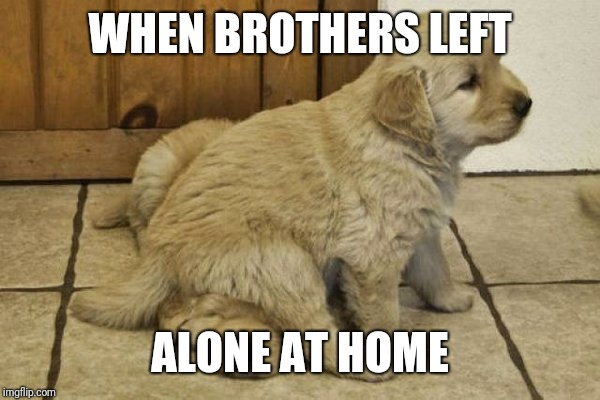 cute puppies | WHEN BROTHERS LEFT ALONE AT HOME | image tagged in cute puppies | made w/ Imgflip meme maker