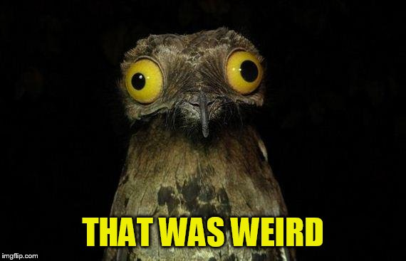 Weird Stuff I Do Potoo Meme | THAT WAS WEIRD | image tagged in memes,weird stuff i do potoo | made w/ Imgflip meme maker