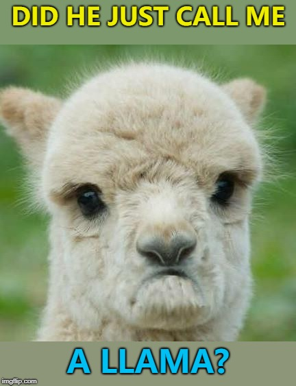 It could be worse... :) | DID HE JUST CALL ME A LLAMA? | image tagged in dissatisfied alpaca,memes,animals,alpaca | made w/ Imgflip meme maker