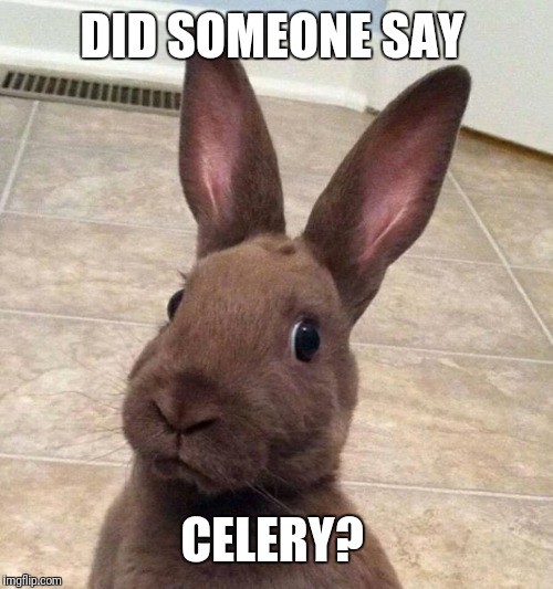 Really? Rabbit | DID SOMEONE SAY CELERY? | image tagged in really rabbit | made w/ Imgflip meme maker