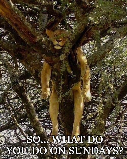 SO... WHAT DO YOU DO ON SUNDAYS? | image tagged in lion | made w/ Imgflip meme maker