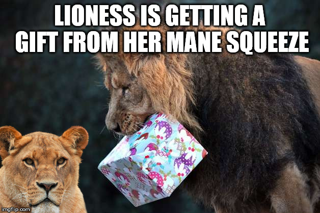 A box of meat? | LIONESS IS GETTING A GIFT FROM HER MANE SQUEEZE | image tagged in meme,lion king,lioness,play on words,funny,cats | made w/ Imgflip meme maker