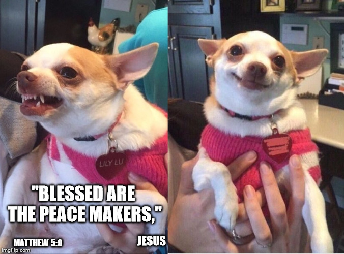"Repentant Chihuahua | ""BLESSED ARE THE PEACE MAKERS,"" JESUS MATTHEW 5:9 