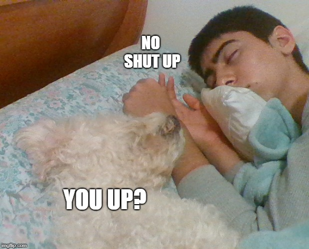 YOU UP? NO SHUT UP | image tagged in hahaha | made w/ Imgflip meme maker