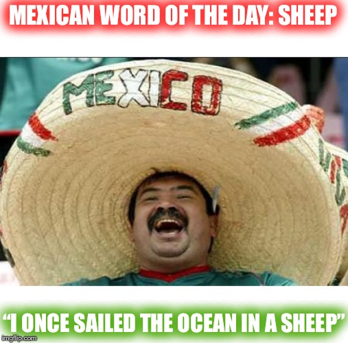 "Ewe must be joking. | MEXICAN WORD OF THE DAY: SHEEP ""I ONCE SAILED THE OCEAN IN A SHEEP"" 