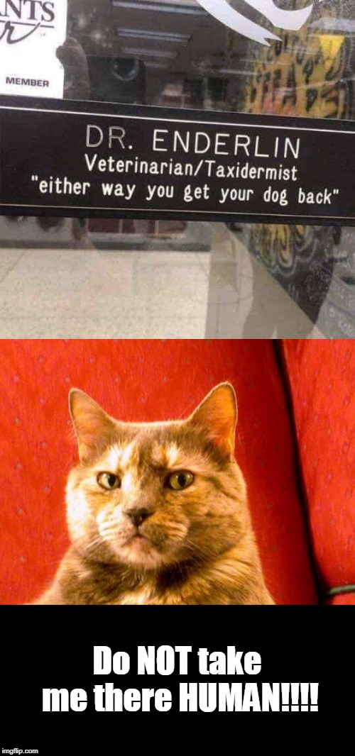 Hmmmm | Do NOT take me there HUMAN!!!! | image tagged in memes,suspicious cat,veterinarian,troll | made w/ Imgflip meme maker