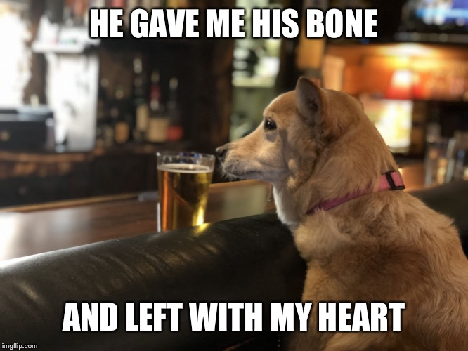 Lonely dog | HE GAVE ME HIS BONE AND LEFT WITH MY HEART | image tagged in dog,dogs,sad dog,dog meme,bar,single life | made w/ Imgflip meme maker