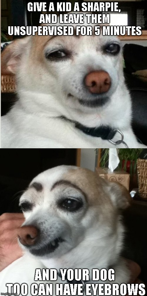 My Kids Are Thinking Of Starting A New Doggy Makeup Line.. Anyone Interested ? | GIVE A KID A SHARPIE, AND LEAVE THEM UNSUPERVISED FOR 5 MINUTES AND YOUR DOG TOO CAN HAVE EYEBROWS | image tagged in sharpie,dod eyebrows,dog makeup,new business | made w/ Imgflip meme maker