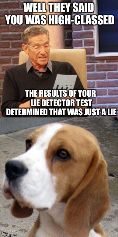 You ain't nothin' but a hound dog | WELL THEY SAID YOU WAS HIGH-CLASSED THE RESULTS OF YOUR LIE DETECTOR TEST DETERMINED THAT WAS JUST A LIE | image tagged in memes,maury lie detector,hound dog,elvis,dogs | made w/ Imgflip meme maker