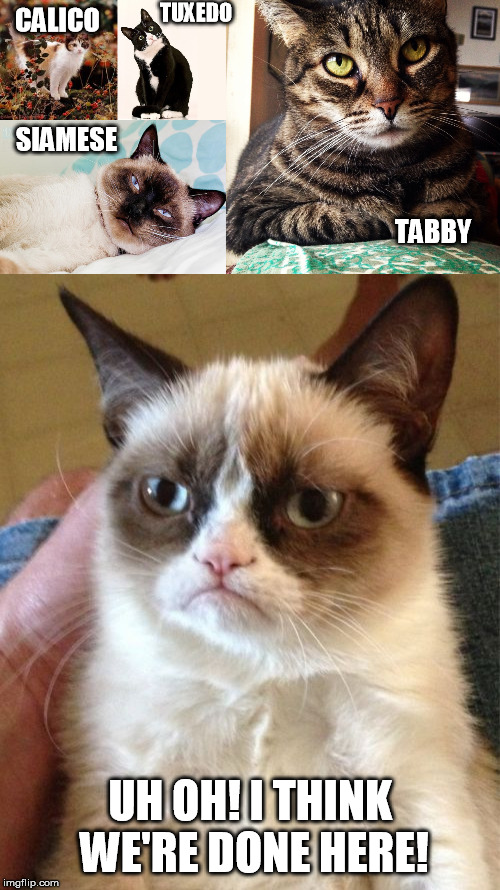 A selection of different cats and one is more different than the others...... | CALICO UH OH! I THINK WE'RE DONE HERE! TUXEDO SIAMESE TABBY | image tagged in memes,grumpy cat,tabby cat,calico cat in nature,siamese cat,tuxedo cat | made w/ Imgflip meme maker