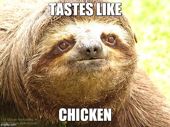 tastes like chicken | TASTES LIKE CHICKEN | image tagged in sloth,chicken,funny | made w/ Imgflip meme maker