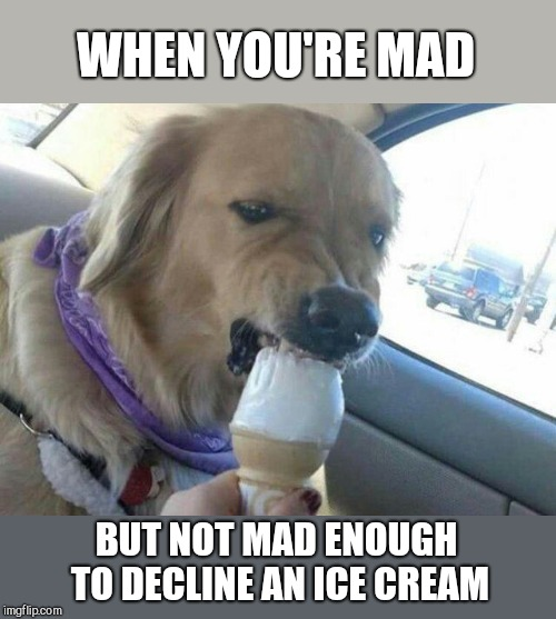 WHEN YOU'RE MAD; BUT NOT MAD ENOUGH TO DECLINE AN ICE CREAM | image tagged in dogs,icecream | made w/ Imgflip meme maker