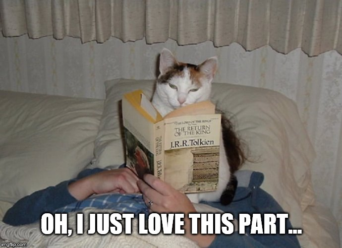 You want to read in bed? No, that's not gonna happen. | OH, I JUST LOVE THIS PART... | image tagged in funny cats,cats | made w/ Imgflip meme maker