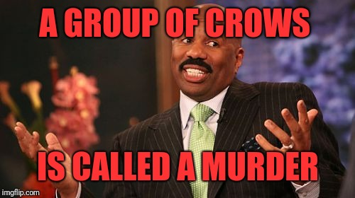 Steve Harvey Meme | A GROUP OF CROWS IS CALLED A MURDER | image tagged in memes,steve harvey | made w/ Imgflip meme maker