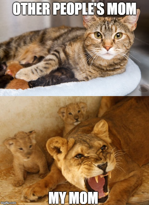 OTHER PEOPLE'S MOM MY MOM | image tagged in mom,cats,lioness,daughter,son,protective | made w/ Imgflip meme maker