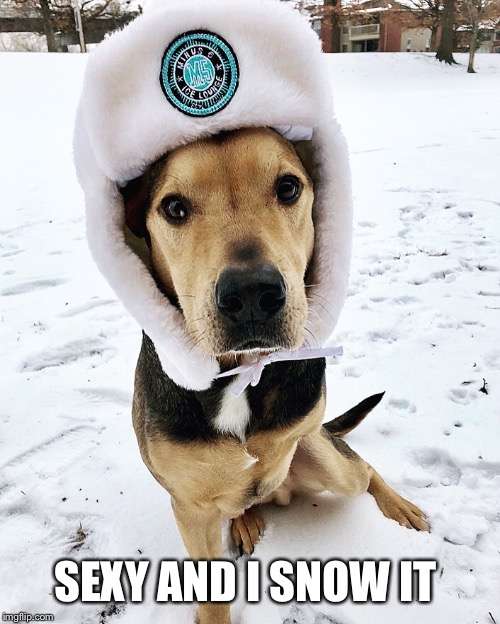 Sexy and I snow it  | SEXY AND I SNOW IT | image tagged in snow,dog,humor,sexy,funny dog memes | made w/ Imgflip meme maker