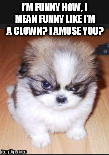 Little Dog Syndrome  | I'M FUNNY HOW, I MEAN FUNNY LIKE I'M A CLOWN? I AMUSE YOU? | image tagged in cute puppies | made w/ Imgflip meme maker