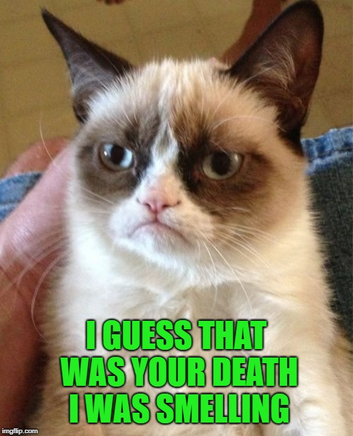 Grumpy Cat Meme | I GUESS THAT WAS YOUR DEATH I WAS SMELLING | image tagged in memes,grumpy cat | made w/ Imgflip meme maker