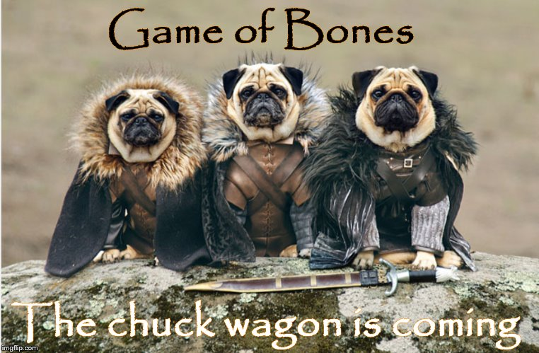 Game of BOnes |  Game of Bones; The chuck wagon is coming | image tagged in dogs,funny memes,memes,dog memes,funny dog memes,meme | made w/ Imgflip meme maker