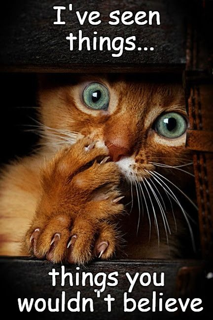 I've seen things... | I've seen things... things you wouldn't believe | image tagged in cat memes,cats,scared cat | made w/ Imgflip meme maker