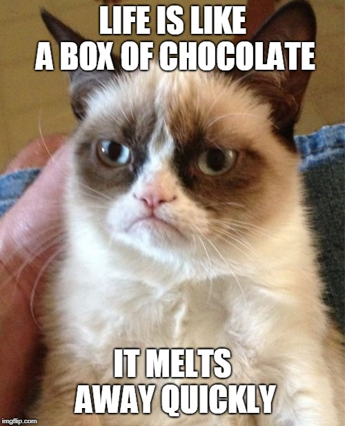 Life Is Like A Box of Chocolate | LIFE IS LIKE A BOX OF CHOCOLATE IT MELTS AWAY QUICKLY | image tagged in memes,angry cat,life,life is like a box of chocolates,food,funny | made w/ Imgflip meme maker