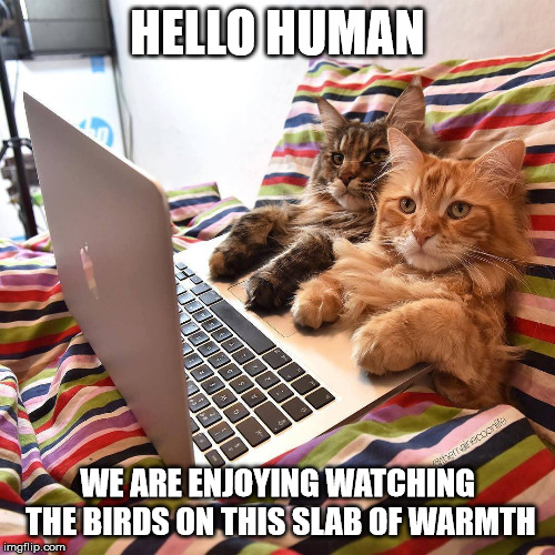 Computer Kitties |  HELLO HUMAN; WE ARE ENJOYING WATCHING THE BIRDS ON THIS SLAB OF WARMTH | image tagged in funny cats,computer,cute cat,bed,warmth | made w/ Imgflip meme maker