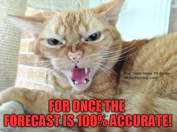 Hissy Fit Jones | FOR ONCE THE FORECAST IS 100% ACCURATE! | image tagged in hissy fit jones | made w/ Imgflip meme maker