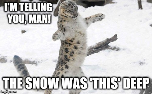 The Snow Was 'This' Deep |  I'M TELLING YOU, MAN! THE SNOW WAS 'THIS' DEEP | image tagged in snow,winter,winter storm,animals,funny animals,shawnljohnson | made w/ Imgflip meme maker