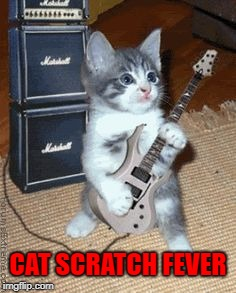 CAT SCRATCH FEVER | image tagged in cats,memes,kittens,funny,rock,animals | made w/ Imgflip meme maker