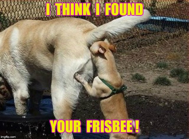 I  THINK  I  FOUND YOUR  FRISBEE ! | made w/ Imgflip meme maker