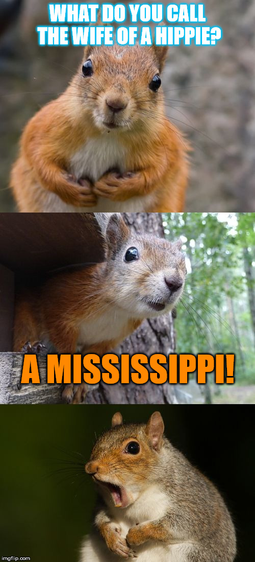 Even free love has marriage! | WHAT DO YOU CALL THE WIFE OF A HIPPIE? A MISSISSIPPI! | image tagged in bad pun squirrel,hippies,marriage,bad pun,bad joke,squirrel | made w/ Imgflip meme maker