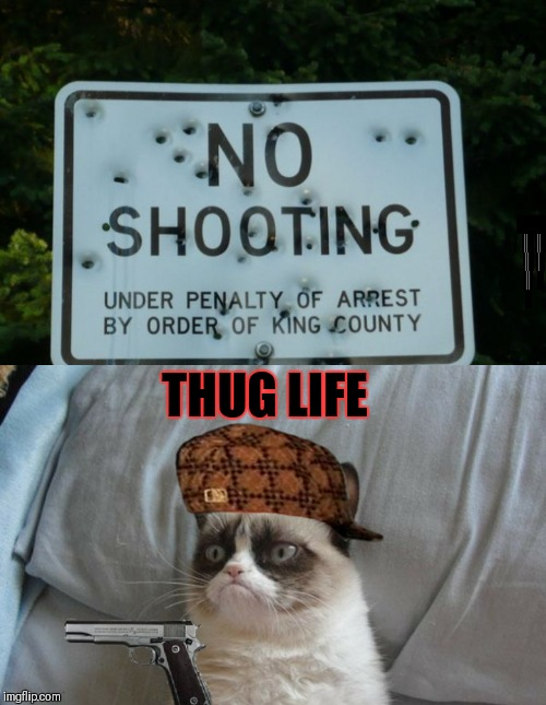 Or should I say grump life? | THUG LIFE | image tagged in grumpy cat gun,thug life,funny,no shooting sign,funny signs,guns | made w/ Imgflip meme maker