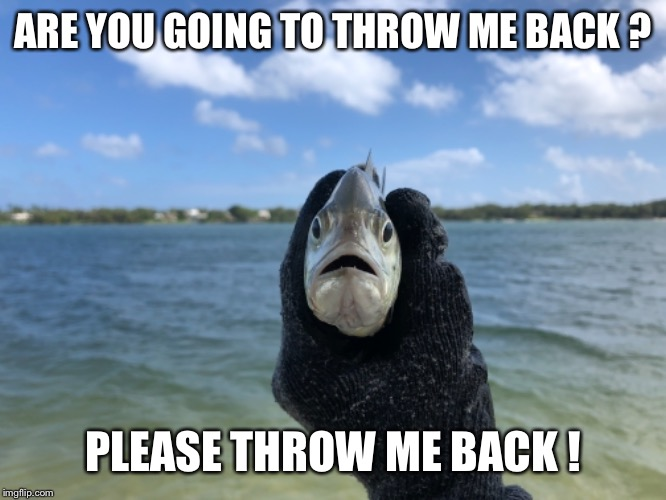 ARE YOU GOING TO THROW ME BACK ? PLEASE THROW ME BACK ! | image tagged in fishing,fish,catch and release,beach,funny meme,ocean | made w/ Imgflip meme maker