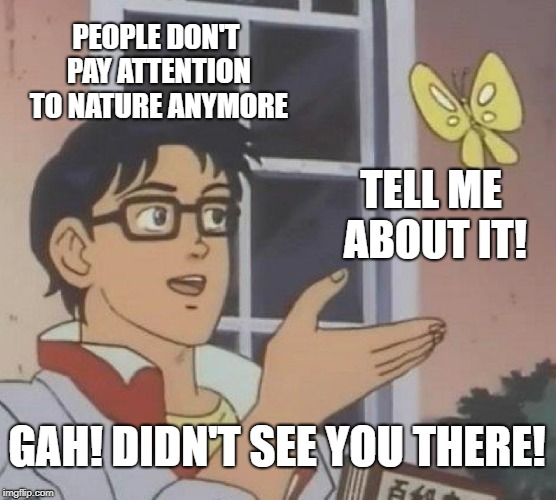 People don't pay attention to nature | PEOPLE DON'T PAY ATTENTION TO NATURE ANYMORE TELL ME ABOUT IT! GAH! DIDN'T SEE YOU THERE! | image tagged in memes,is this a pigeon,butterfly,nature | made w/ Imgflip meme maker
