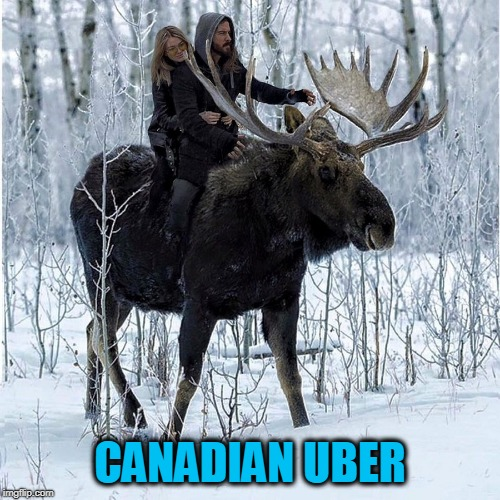 Gets A Two Antler Rating | CANADIAN UBER | image tagged in canada,uber,moose | made w/ Imgflip meme maker