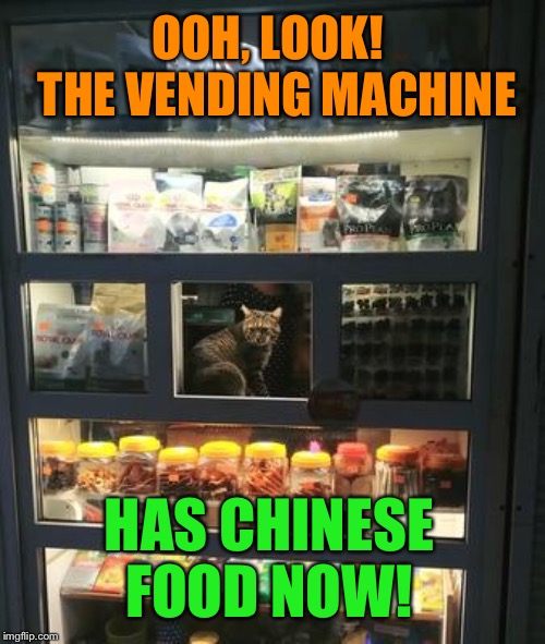 They think of everything! | OOH, LOOK!  THE VENDING MACHINE HAS CHINESE FOOD NOW! | image tagged in cats,chinese food,vending machine,funny memes | made w/ Imgflip meme maker