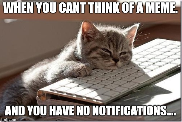 Bored Keyboard Cat | WHEN YOU CANT THINK OF A MEME. AND YOU HAVE NO NOTIFICATIONS.... | image tagged in bored keyboard cat | made w/ Imgflip meme maker