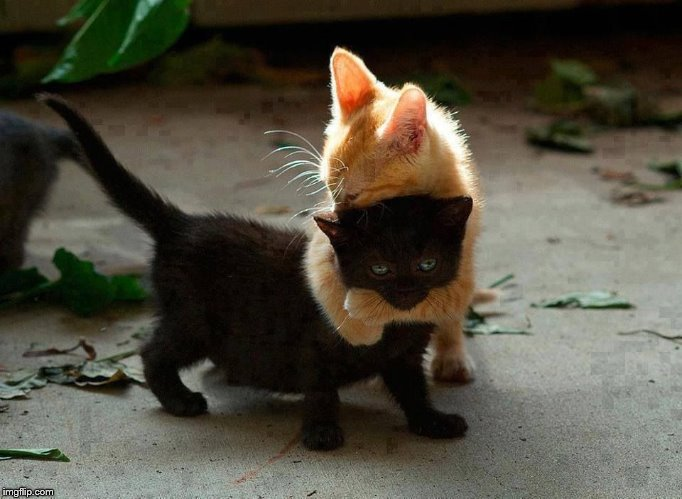 kitten hug | image tagged in kitten hug | made w/ Imgflip meme maker