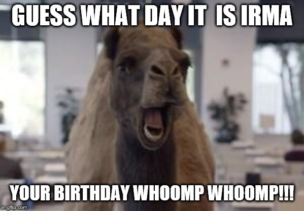 Hump Day Camel | GUESS WHAT DAY IT  IS IRMA YOUR BIRTHDAY WHOOMP WHOOMP!!! | image tagged in hump day camel | made w/ Imgflip meme maker